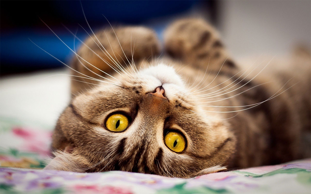 Как растут кошки и коты