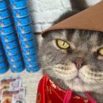 Отзыв Марины из Ишимбая и её любимого кота Антонио