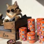 Отзыв Ольги из Липецка и ее кота Leo Alekseevich