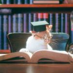 AIXIA «Kenko-Can» MCT для ежедневного поддержания здоровья кошек!