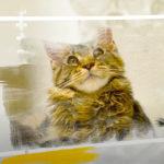 Японский кот Коко сан